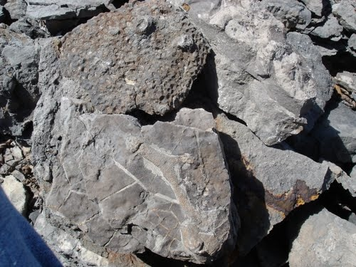Fossils at Rockport
