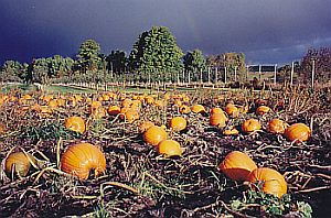 golden_river_orchard.jpg