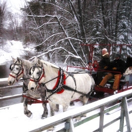 Elk-viewing sleigh ride