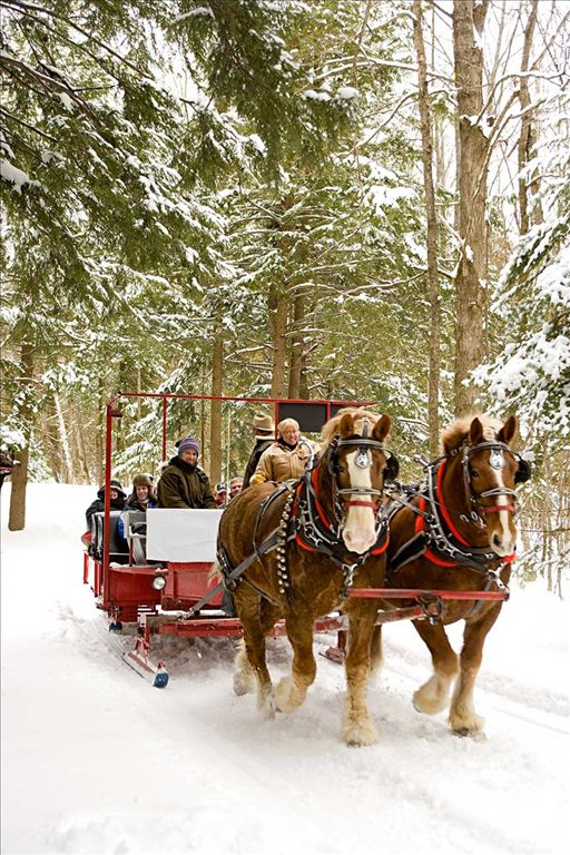 Elk viewing sleigh ride